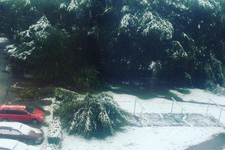 Подачу электричества восстановим, рухнувшие из-за снега деревья уберём— Мэр Абакана