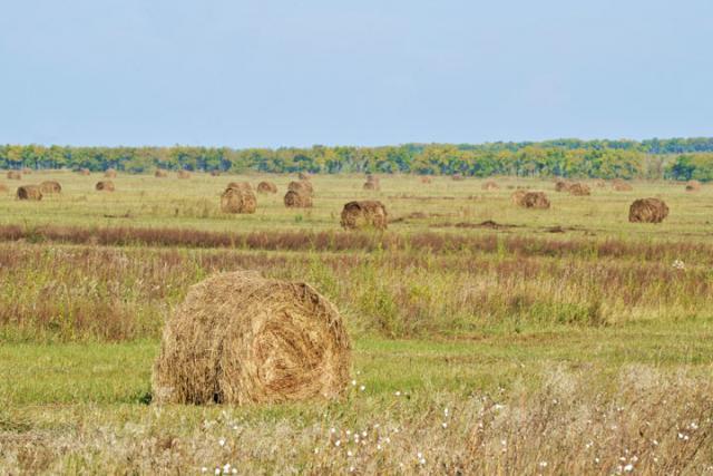 ВХакасии аграрии остановили уборку зерновых из-за снегопада