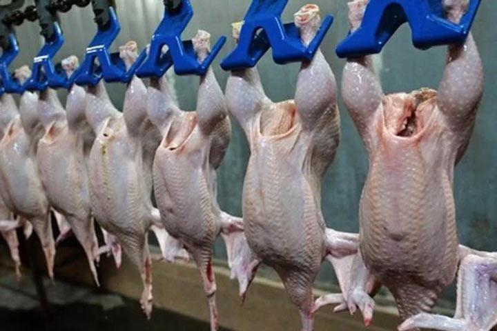Вмясе 3-х южноуральских птицефабрик отыскали превышенное содержание фармацевтических средств