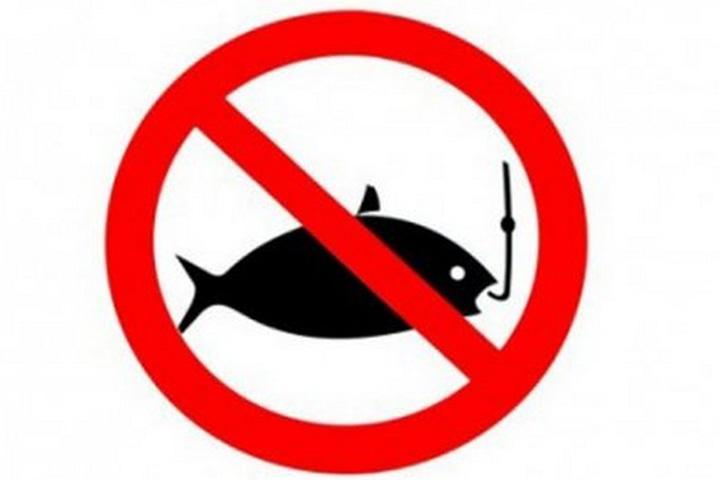 Введен запрет наловлю рыбы вЕнисее