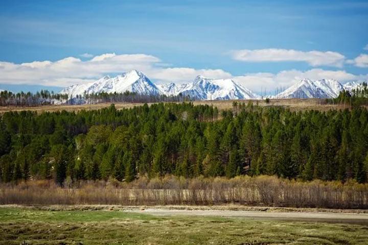 Президент РФ Владимир Путин подписал закон о«лесной амнистии»