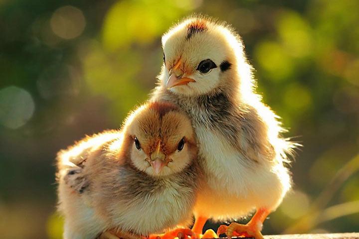 ВНидерландах задержали 2 подозреваемых поделу озараженных яйцах